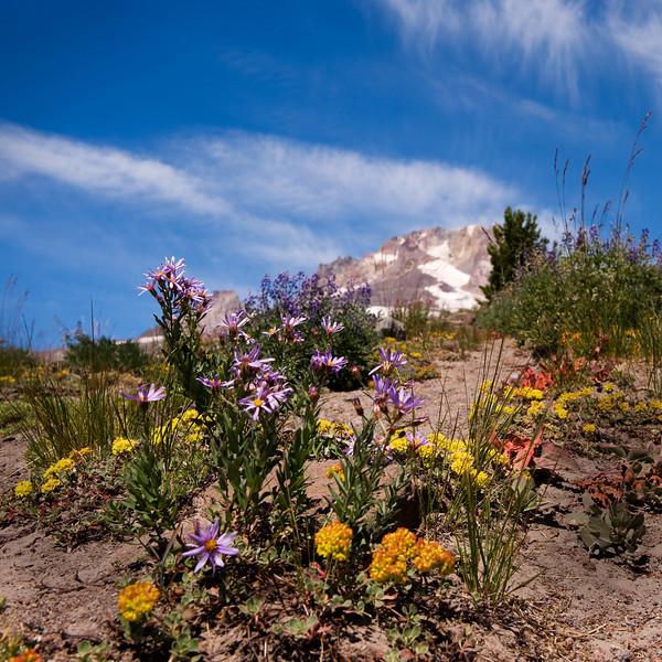 Mount Hood in flowers