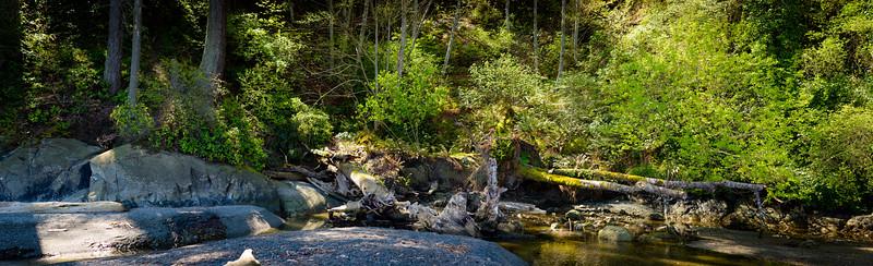 lagoon forest.jpg