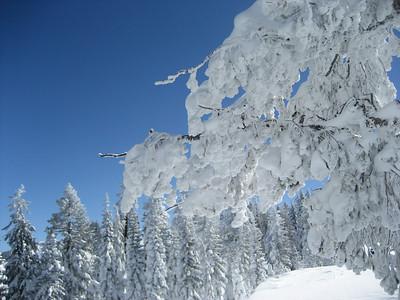 SkiingSugarBowl