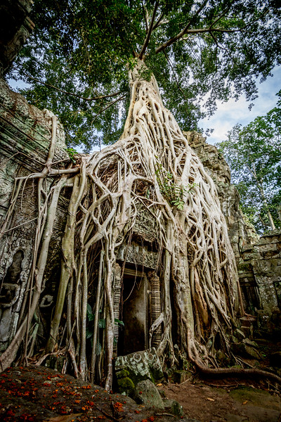 Ta Prohm Temple, Cambodia