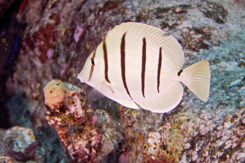 Convict Tang.jpg