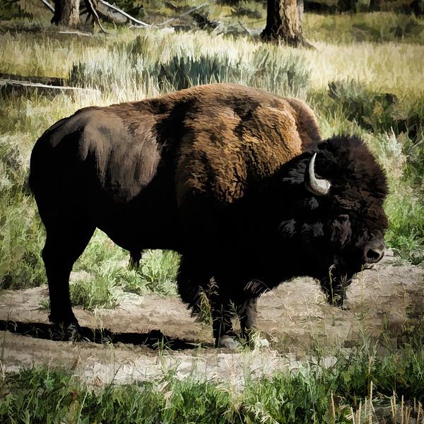 20140915-buffalo-001.JPG