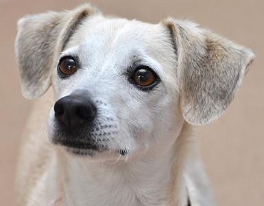 Humane Society Dogs