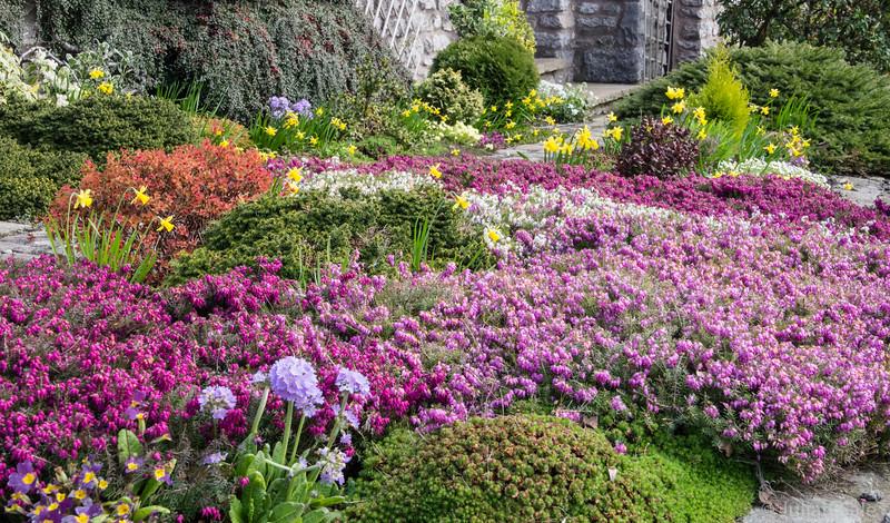 Spring flowers in Kirkby Lonsdale