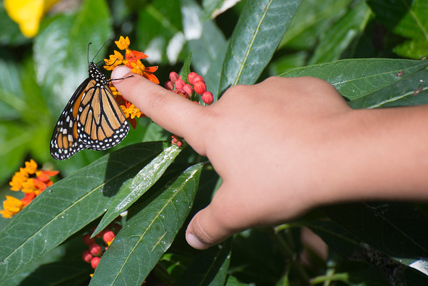 Child and Monarch Butterfly
