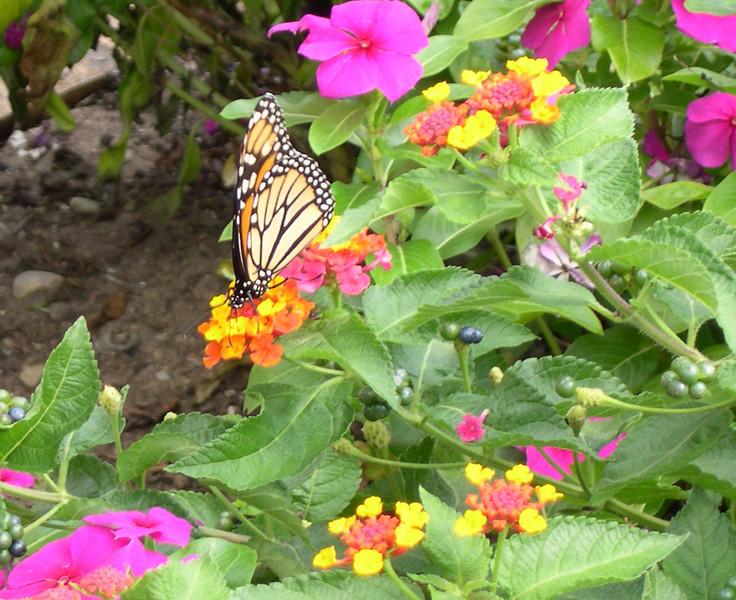 monarch434.jpg