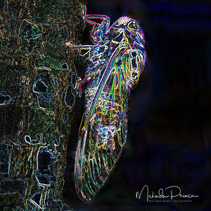 Neon Insects