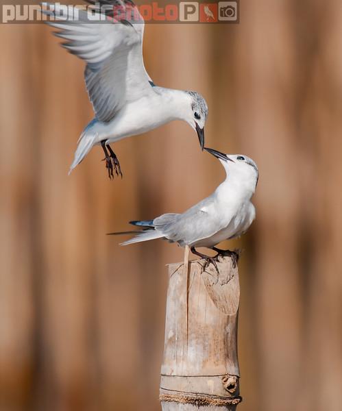 Gulls and Terns
