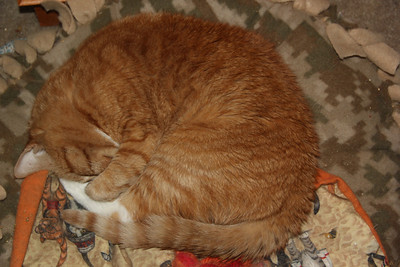 Lucky Sleeping, My House, Tamaqua (6-28-2013)