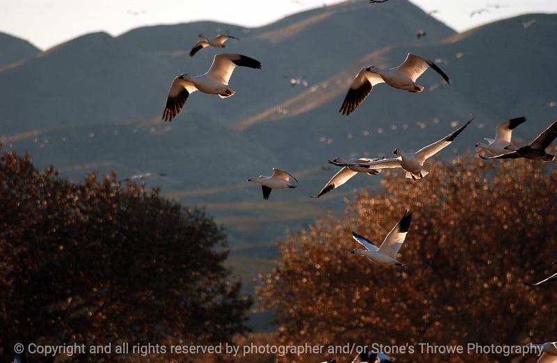 015-birds-bosque_del_apache_nm-01dec06-9849.jpg