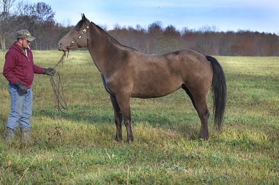 Cindy Weises Mare for sale