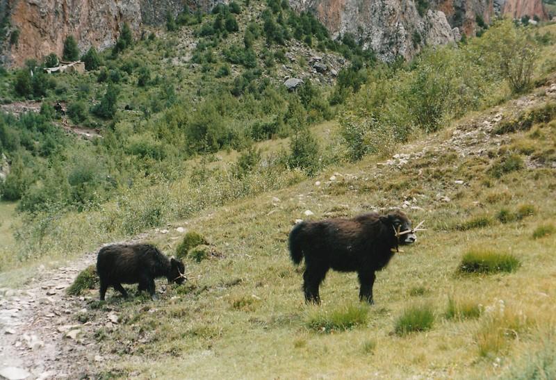 tibet_0051.jpg