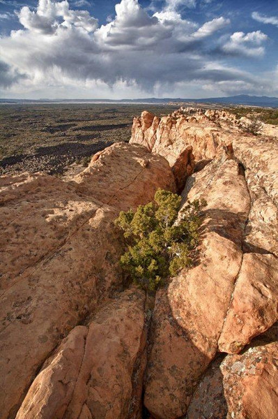 The Sandstone Bluffs along Hwy. 117 offer excellent vistas of El Malpais lava flows and surrounding countryside.