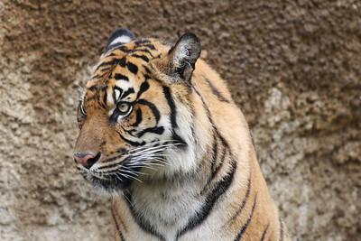Memphis Zoo Up Close