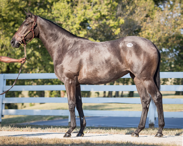 1657 Frosted - Kiss the Lady 18