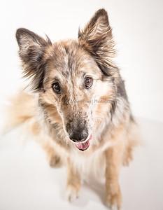 Brekka Animal Clinic Pet of the Month