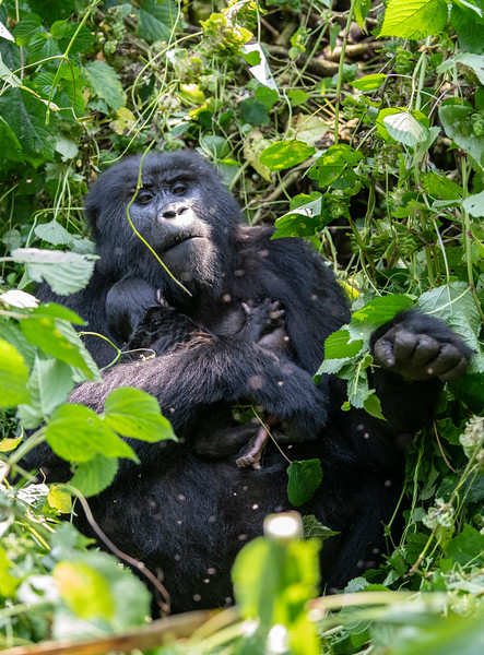 Uganda_T_Gor-1065.jpg