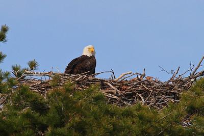 Graveyard Eagles 2012