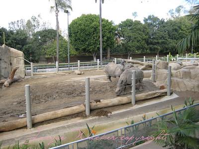 december 9. 2009 san diego zoo