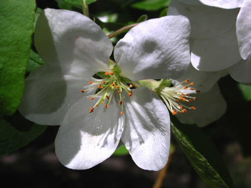 white bloom64.JPG