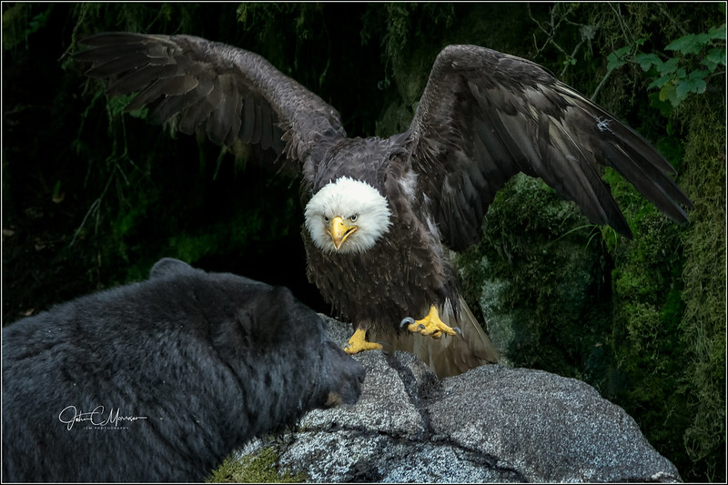 J85_4893 Eagle claw Bear cropped LPNKW.jpg
