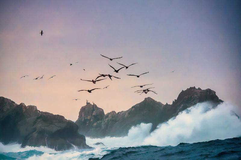 Pelicans and Gulls Over Stormy Pacific Ocean