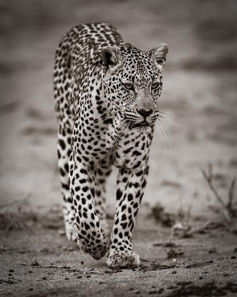 LeopardHills-20191029-1692.jpg