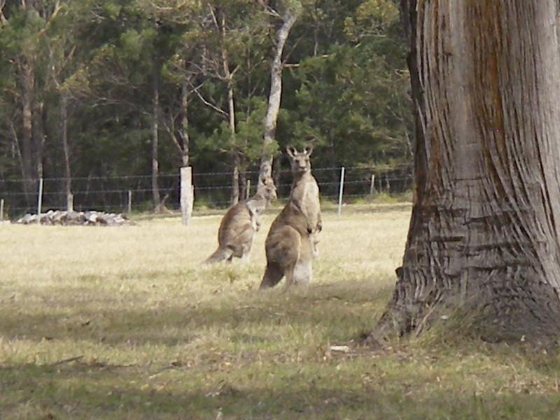 Sydney trip and Mirimbula 124.JPG