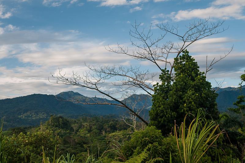 Urari, Panama-6.jpg