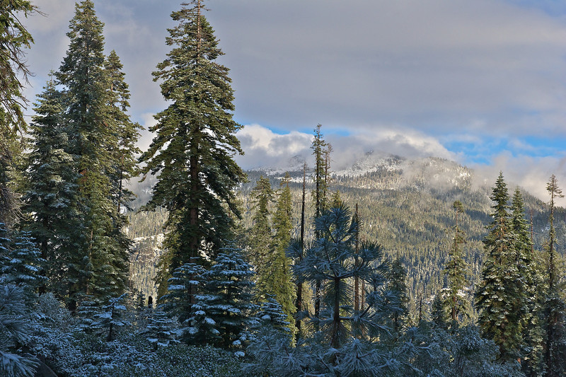 Near Wuksatchi Lodge, Sequoia National Park, California