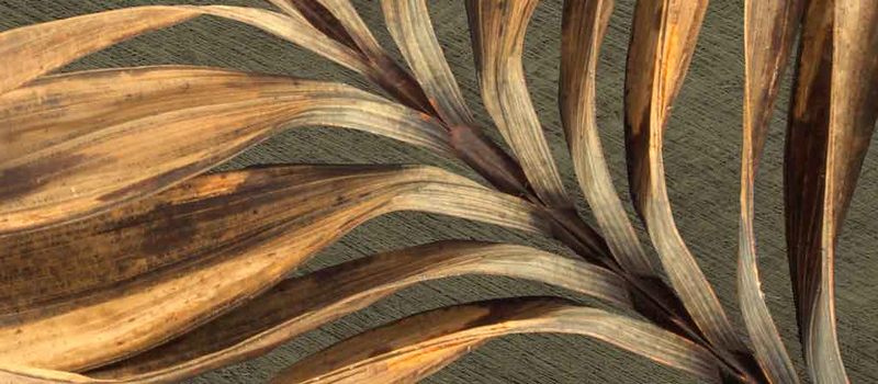 DRIED - MURAL - dried palm.jpg