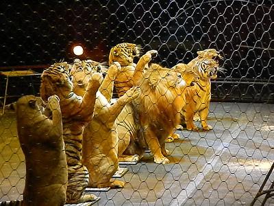Circus 2012