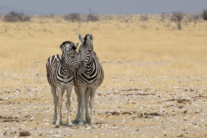 Namibia 69A9170.jpg