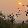 Deer in the jungles of Ranthambhore national park at sunrise