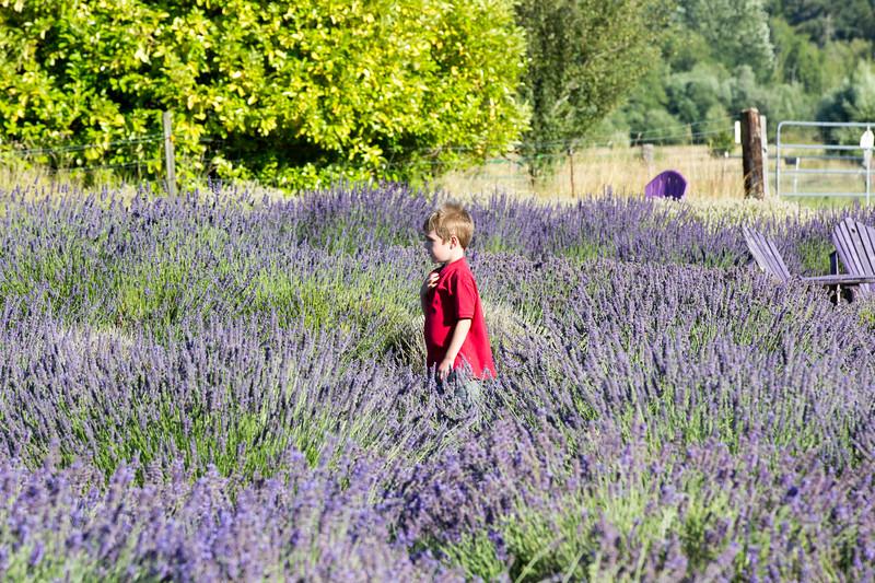 Evergreen Lavender Farm-54.JPG