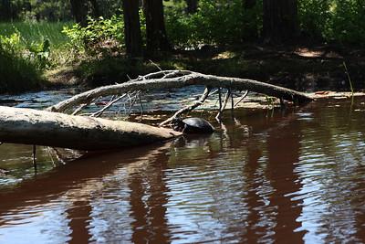 Pine Barrens 2011