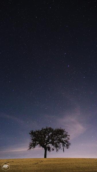 Oak-Tree-1001.jpg