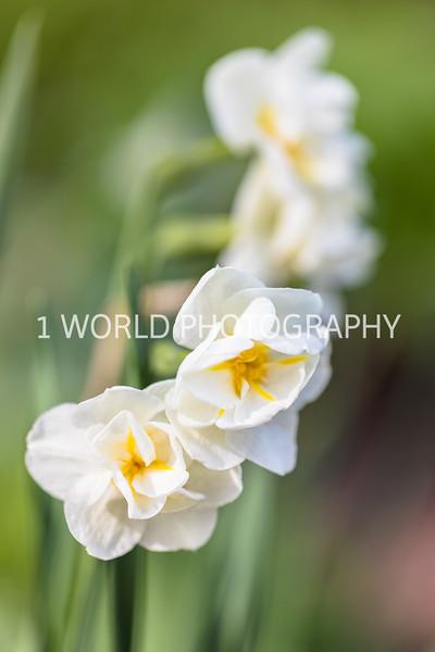 201905102019_Cantigny_Spring102--122.jpg