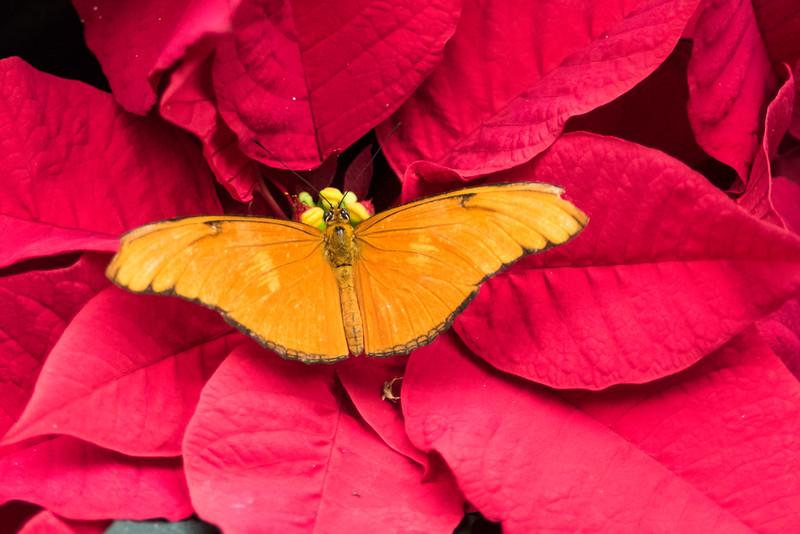 butterfly-237.jpg