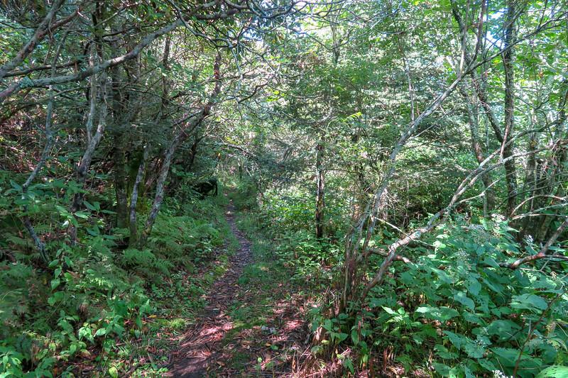 Fork Mountain Trail -- 5,700'