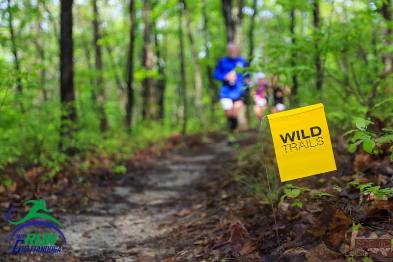 2015 Scenic City Trail 1/2 & Marathon
