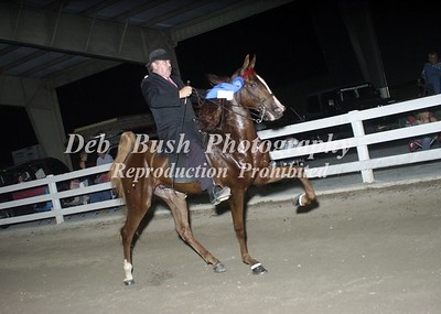 CLASS 20  SADDLEBRED 2 YRS & UNDER
