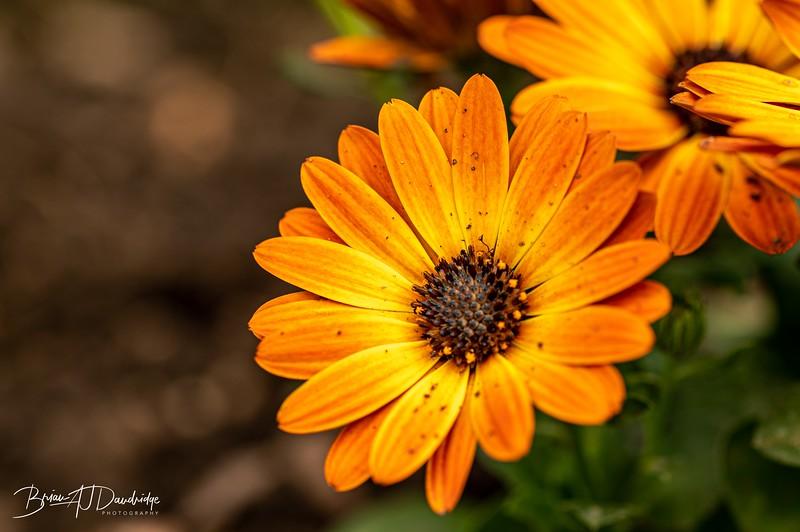 Garden colour-3336.jpg