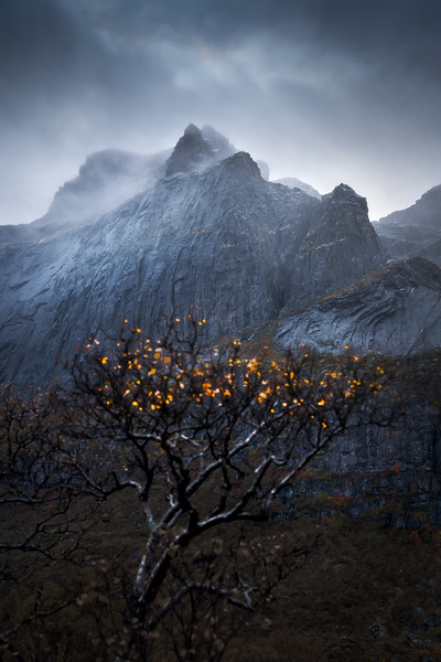 Autumn colors Lofoten moody landscape photography fall mountain birch tree_6.jpg