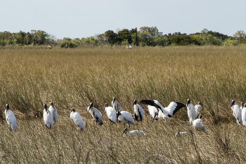 Everglades NP-0163-Select_E.jpg