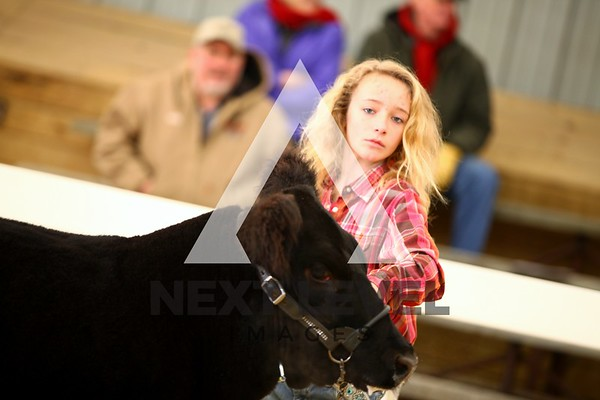 VCCP 2013 Steer Ring Shots