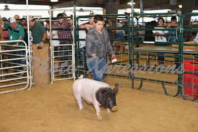 Swine Show Sunday Sept 23
