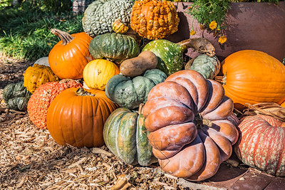 Arrangement of colorful gourds and pumpkins