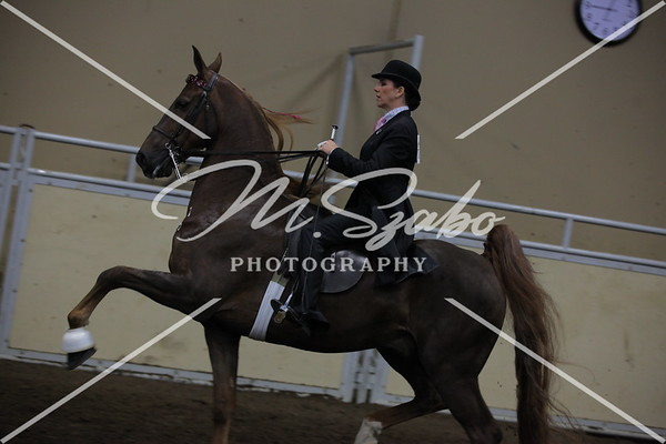 ASB 5-Gaited Amateur