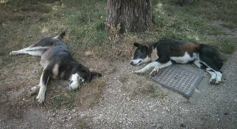 Guard dogs at the open air museum.
